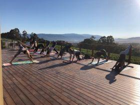 Yoga, Vineyard, Exercise