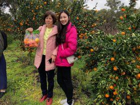 U Pick Mandarin