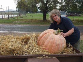 Giant Pumpkin Competition & Creative Arts Exhibition