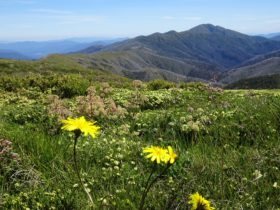 Ecotours and walking tours exploring Victoria's alpine and East Gippsland regions.
