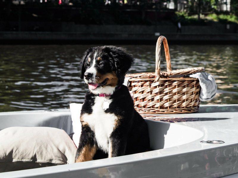 GoBoat Dog Friendly