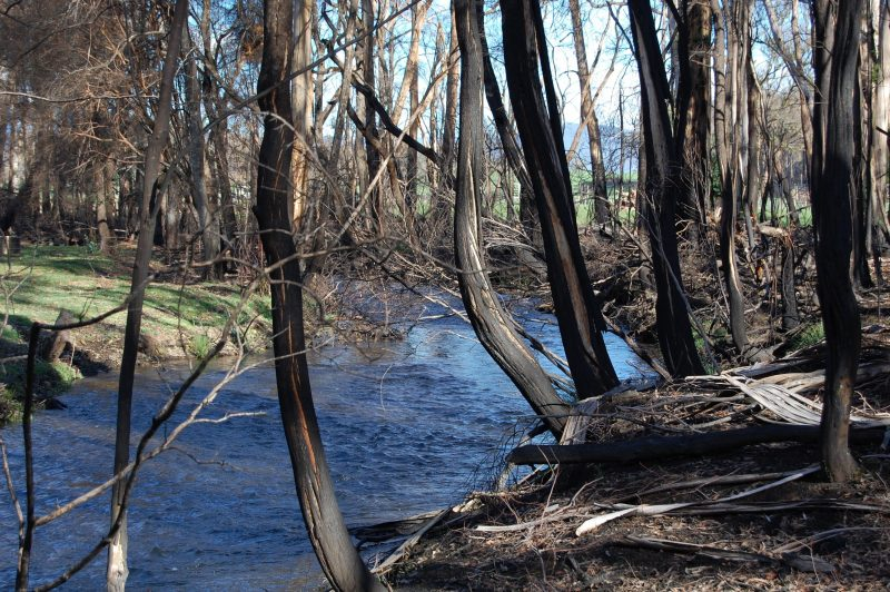 Image of burnt trees next to a stream