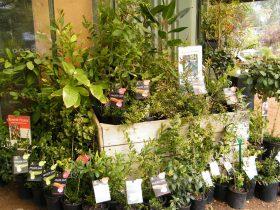 Extensive range of bush foods