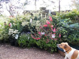 Scruffy checking out the range of native plants