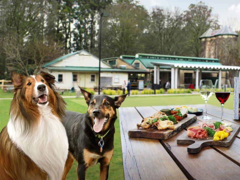 Gourmet Pawprints - Dog Friendly Tours