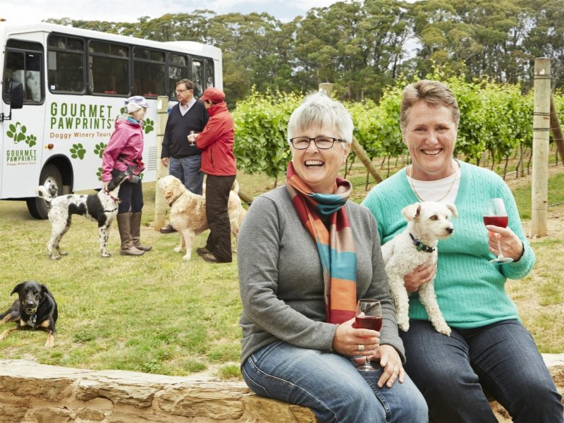 Doggy Winery Tours