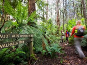 Great Walhalla Alpine Trail