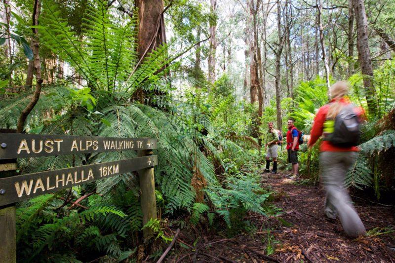 Great Walhalla Alpine Trail