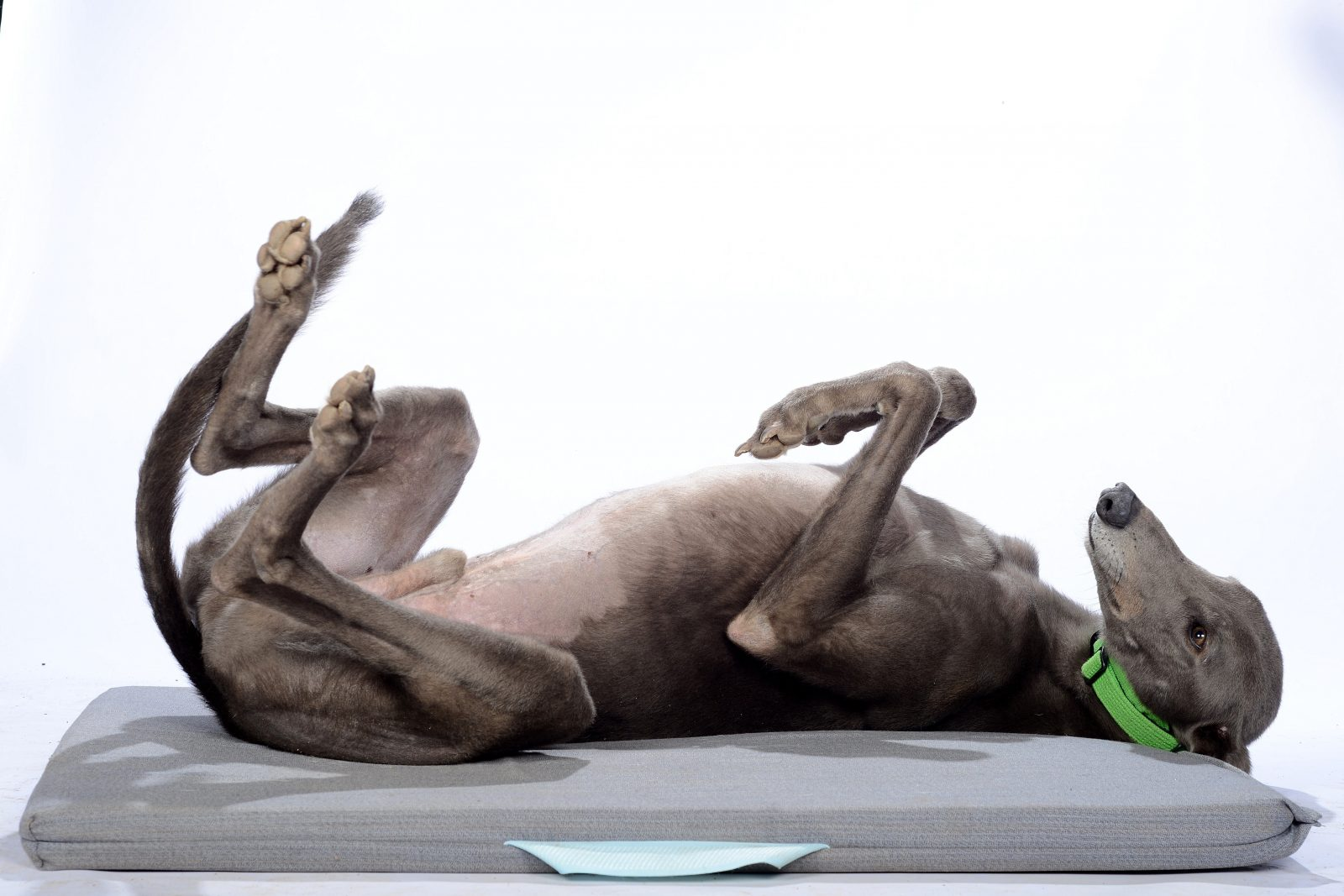 Greyhound Community Day 2019