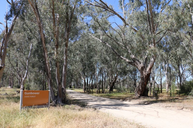 Entrance sign to Gunbower State Forest