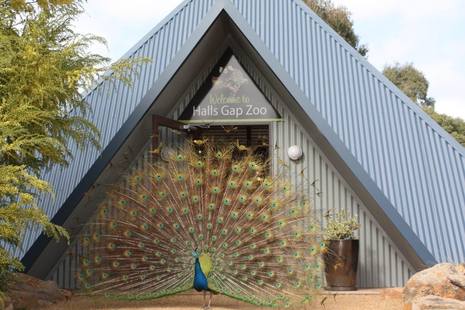 Animals meet and greet you at Halls Gap Zoo