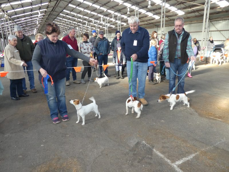 Jack Russell Show