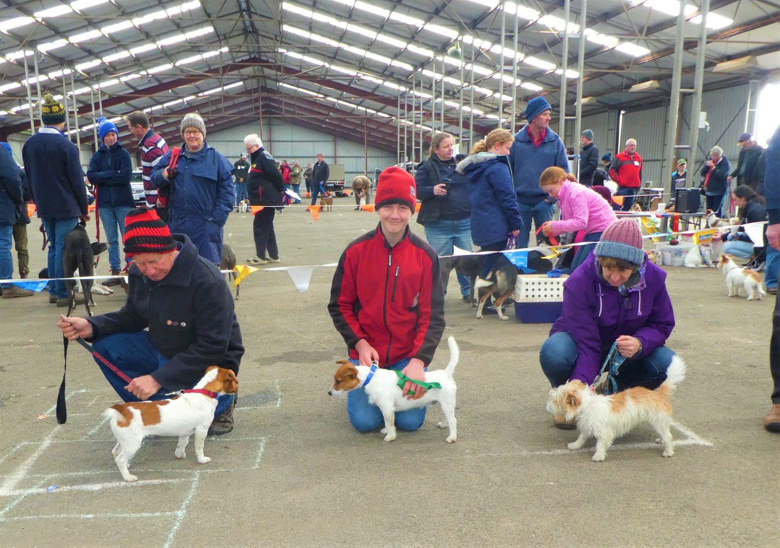Jack Russell Terrier & Hunting Dog Show