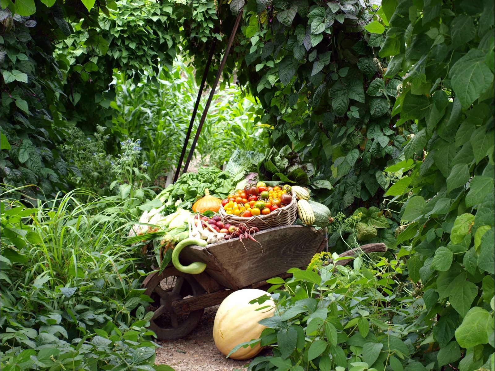 The bountiful Kitchen Garden at Heronswood