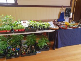 Seedlings for sale in the Memorial Hall