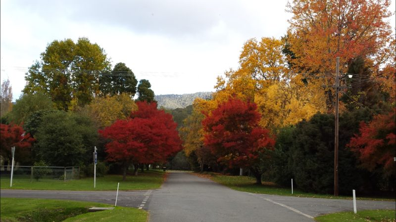 Jamieson Street in Autumn