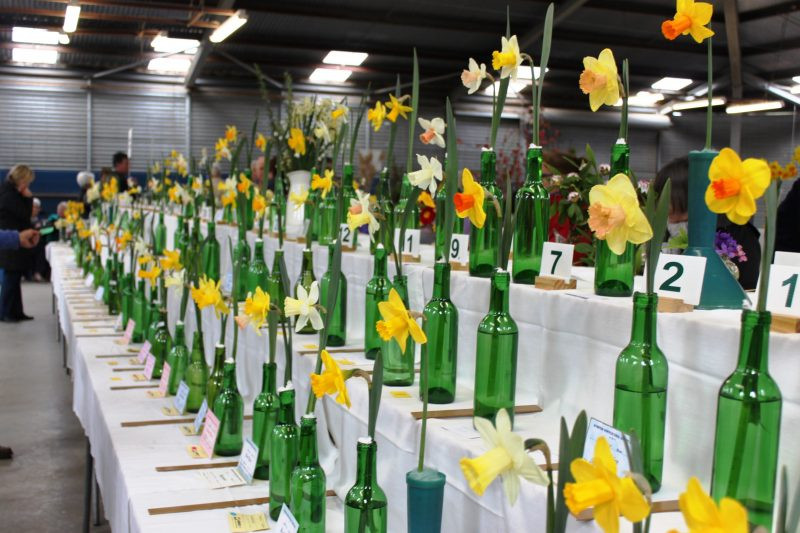 Kyneton Horticultural Spring Flower Show exhibits daffodils, other blooms and floral art