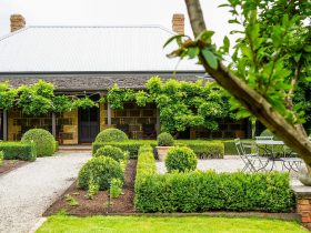 The entrance to the Old Rectory is through a parterre garden. The front verandah is clad in wisteria
