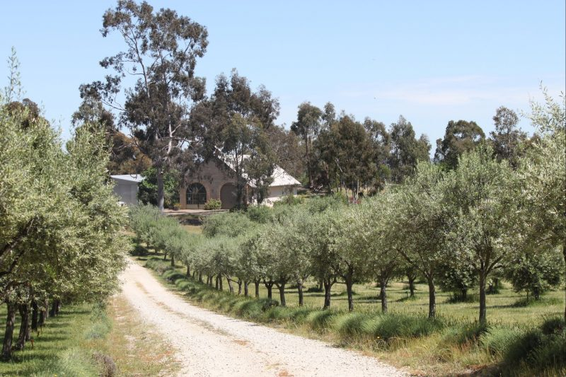 As you enter the property, the beginning of the Olive Grove and the Olive Processing Shed