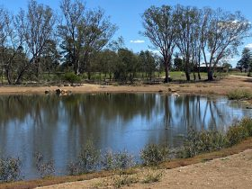 Rutherglen Gold Club overlooks Lake King Wetlands