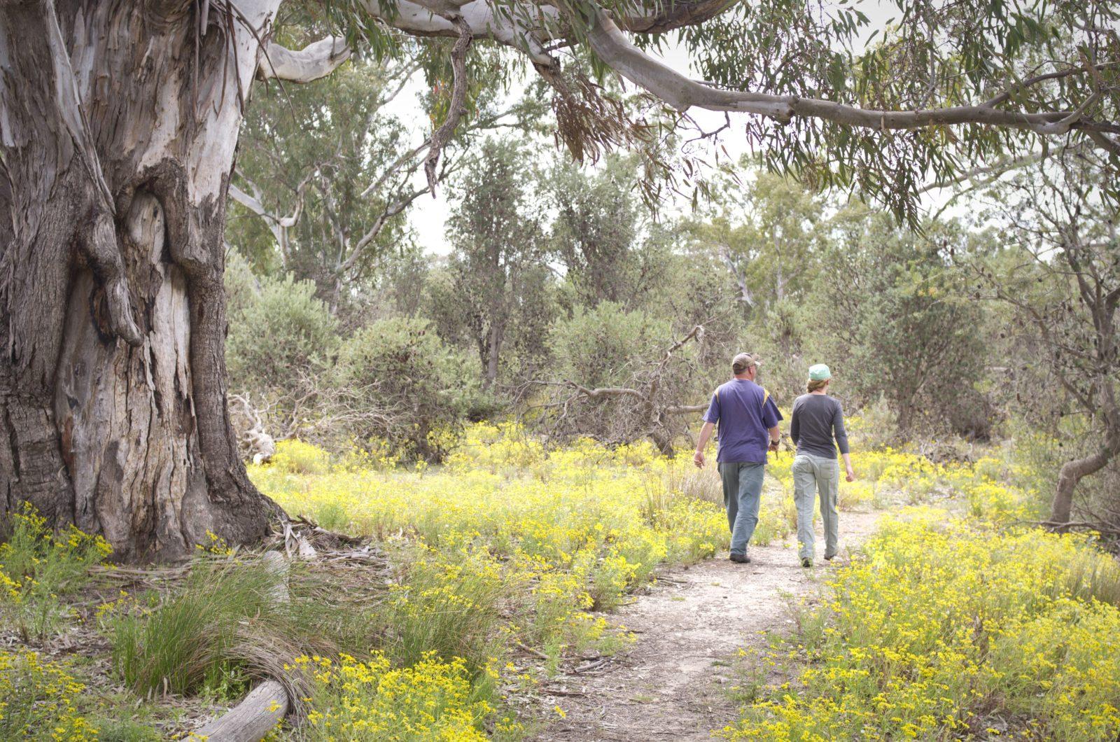 Little Desert National Park