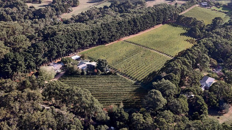 The first licensed winery on the Mornington Peninsula