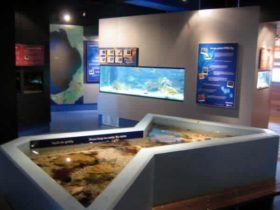 Marine Discovery Centre