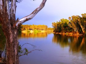 The Murray River - This is the starting line at Yarrawonga