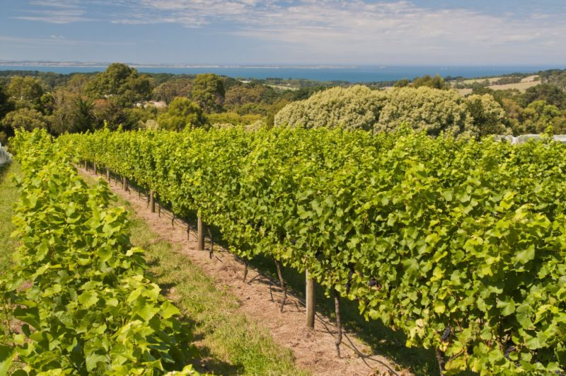 Stunning vineyard and coastal views