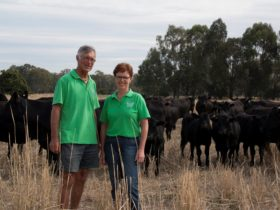 Milawa Organic Beef - Leanne and Alan