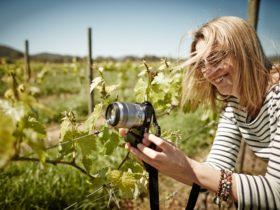 Milawa Wine Tours