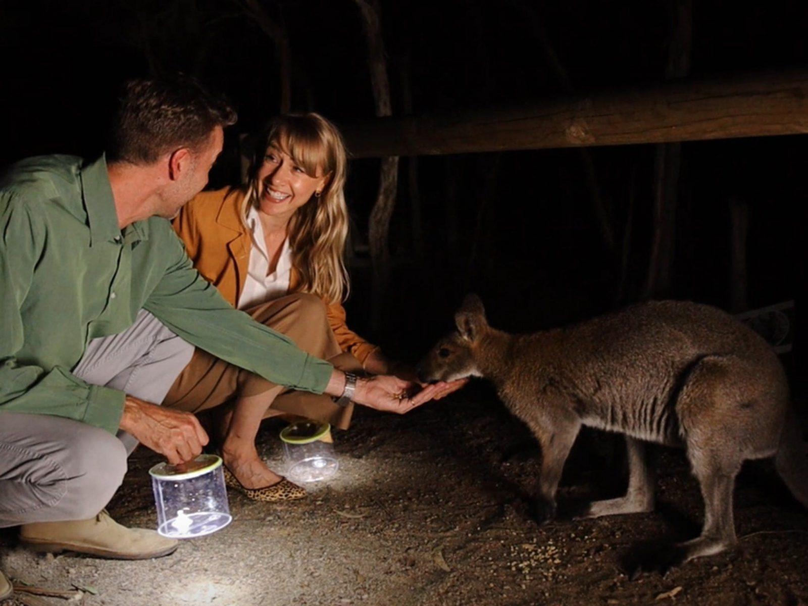 Hand feed wallabies and kangaroos
