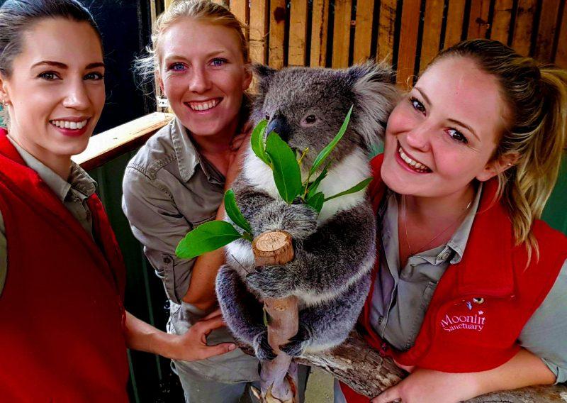 Meet the friendly koala keepers