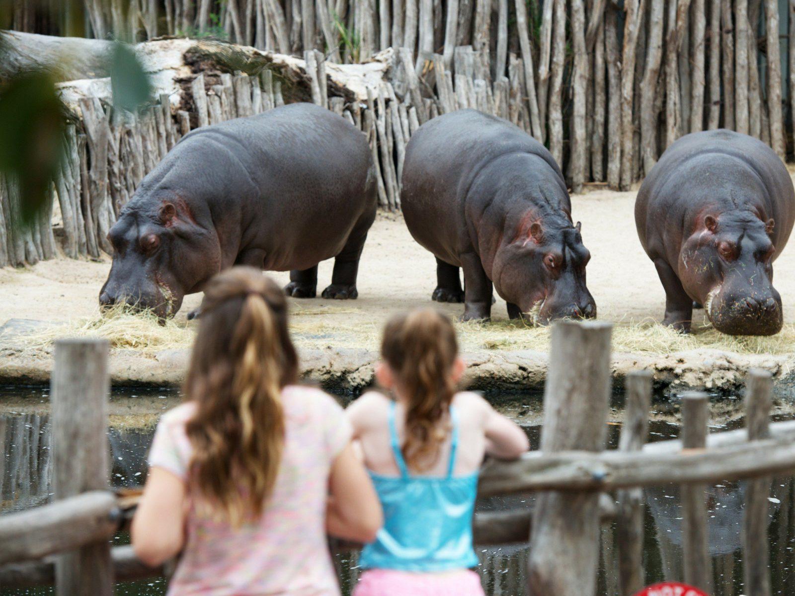 High Tea at Werribee Zoo