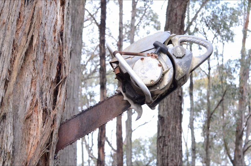 Chainsaw in tree