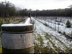 Snow in the vineyard, 2016