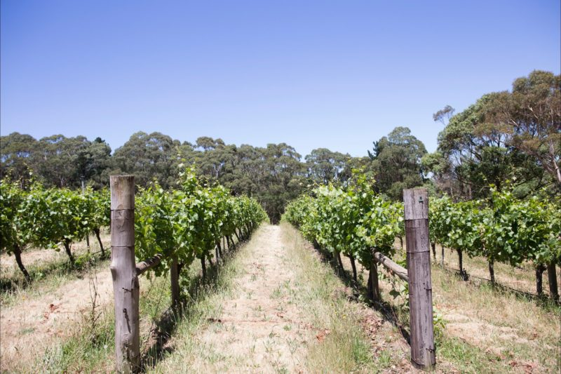 Mount Macedon Winery Vineyard