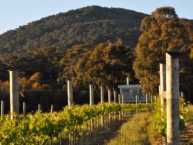 Mount Towrong Vineyard Cellar Door