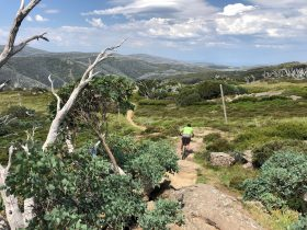 Mountain Bike Tours Australia Falls Creek
