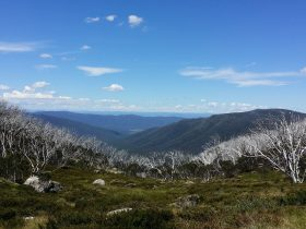 Looking to the horizon over the Bogong High Plains
