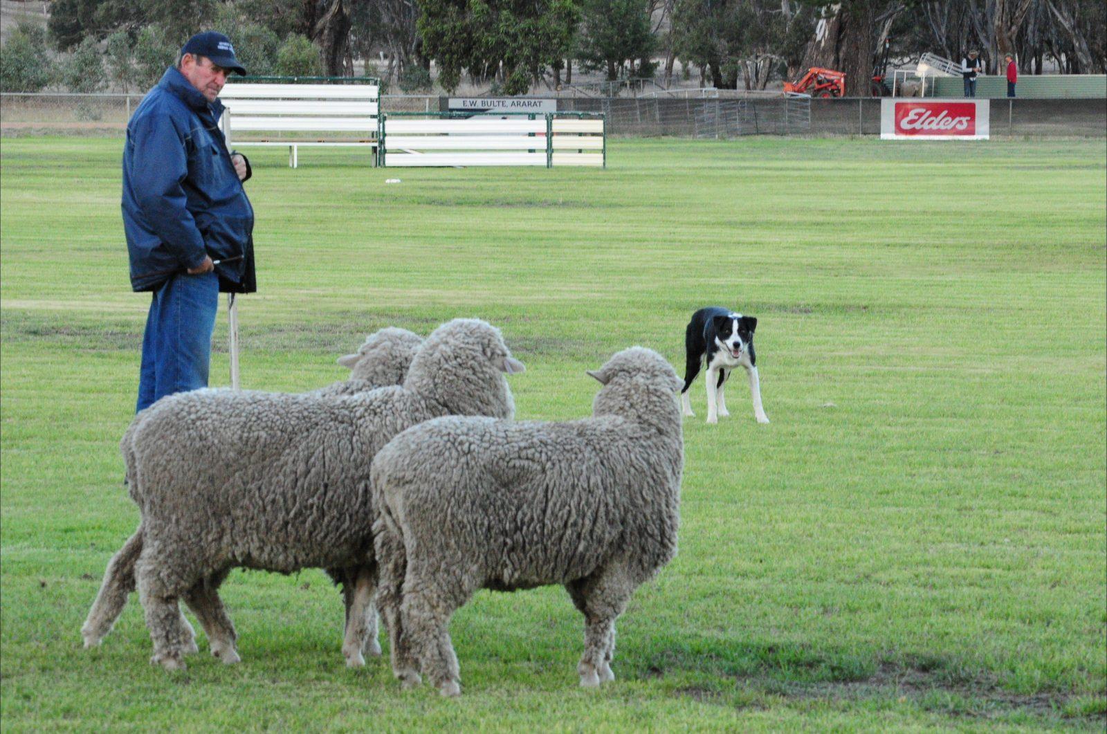 Moyston Sheepdog Trials