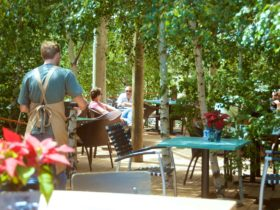 Dining Amongst the Birch Trees at Mr Grubb