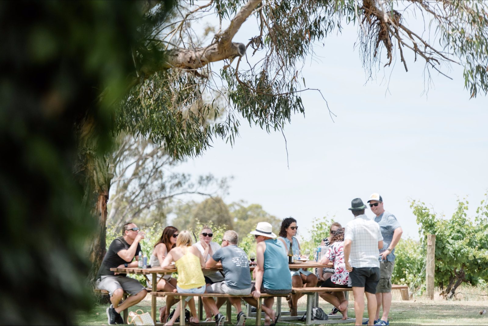 Music on the Murray at St Leonards Vineyard