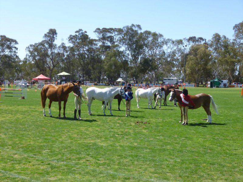 Pony Club Ring