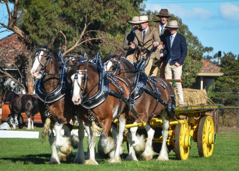 Heavy Horse Team