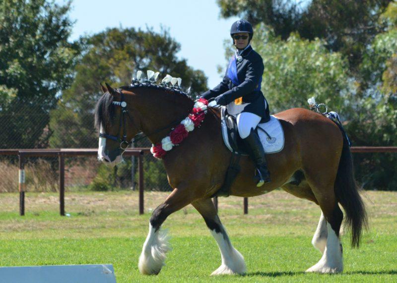 Heavy Horse under saddle
