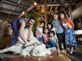 Sheap Shearing at the National Wool Museum