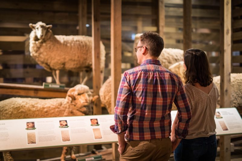National Wool Museum looking at sheep