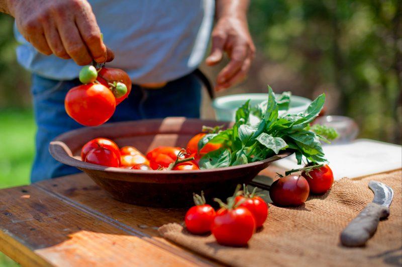 Spring Spur Garden Tomatoes