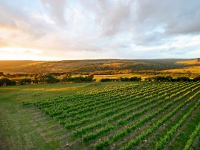 Nazaaray Winery at Flinders on the Mornington Peninsula